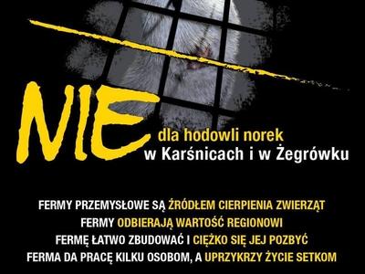 Nie Dla Norek Sukces Protestujących Radio Poznań