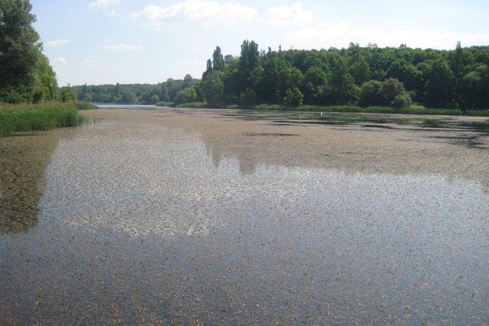 jezioro winiary pokryte roślinami - Rafał Muniak