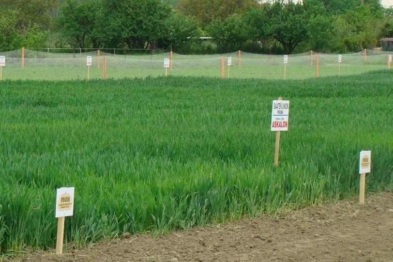 pole doświadczalne ośrodek rolniczy - CWE w Gołąszynie