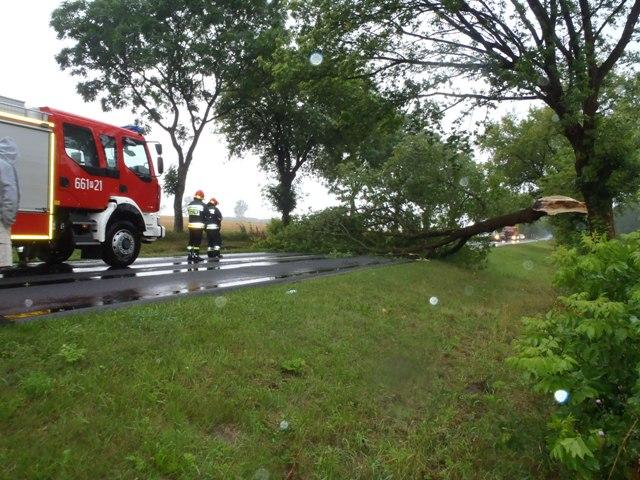 po nawałnicy nawałnica powalone drzewo - Straż Pożarna Poznań