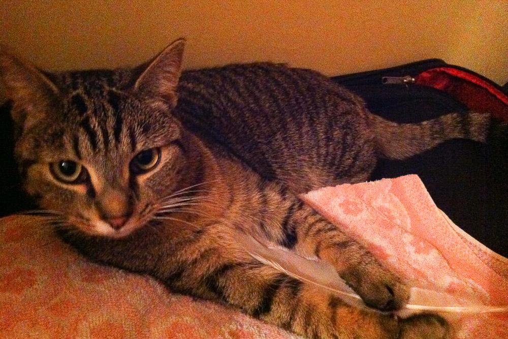 kotek na ręczniku - Stefcia
