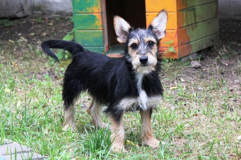 Daisy - schronisko dla zwierząt w Poznaniu
