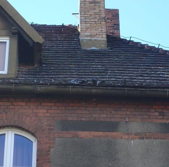 martwe gołębie - Straż Miejska