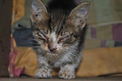 kotek mały - Fundacja Zwierzęce SOS