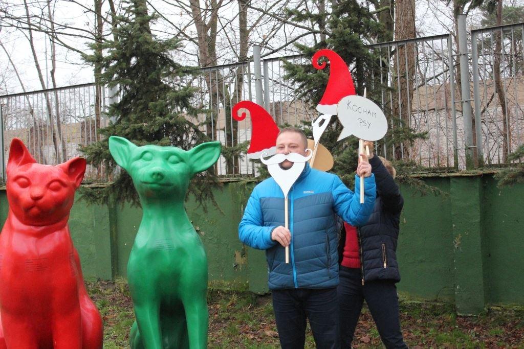 Elfy robią selfie akcja karma dla zwierząt - Schronisko dla zwierząt w Poznaniu