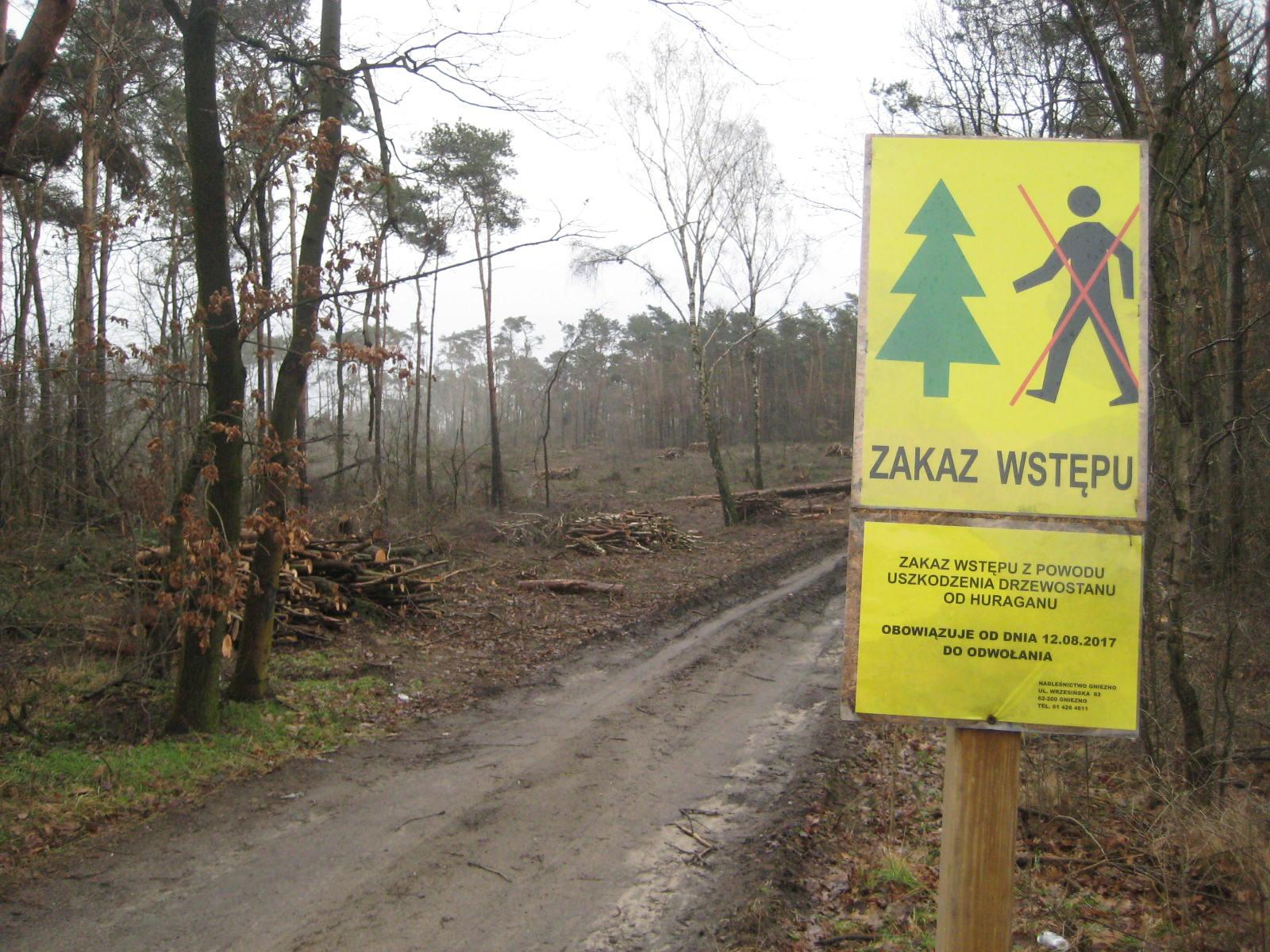 gniezno las nawałnica sprzątanie - Rafał Muniak