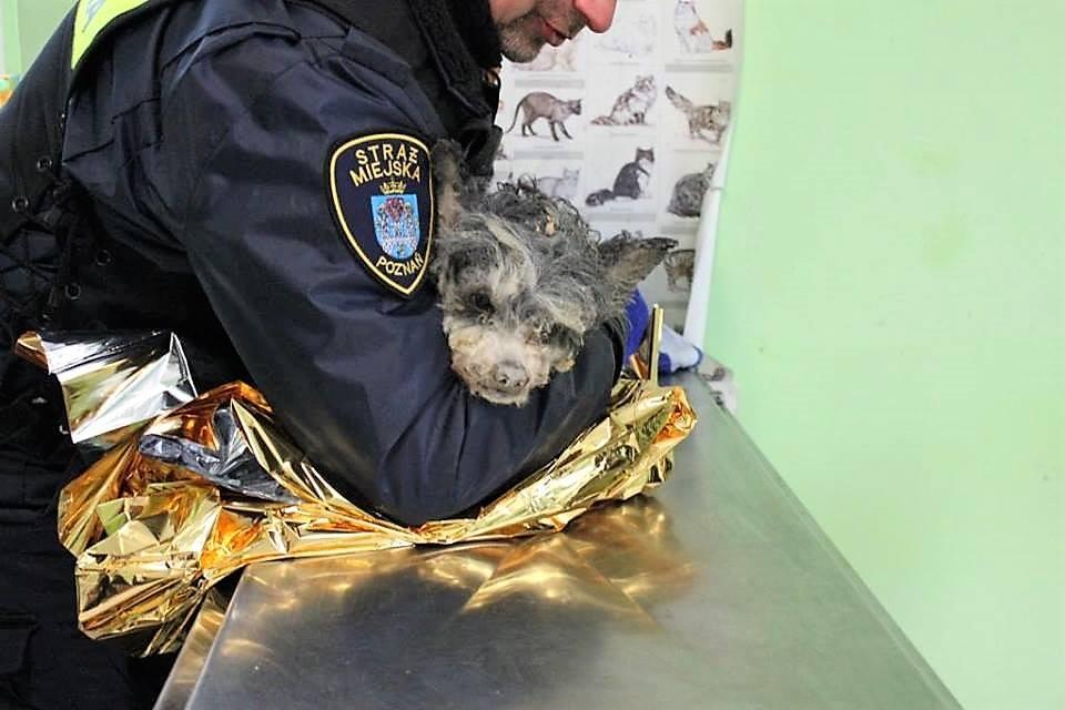 piesek - Schronisko dla zwierząt w Poznaniu, Facebook