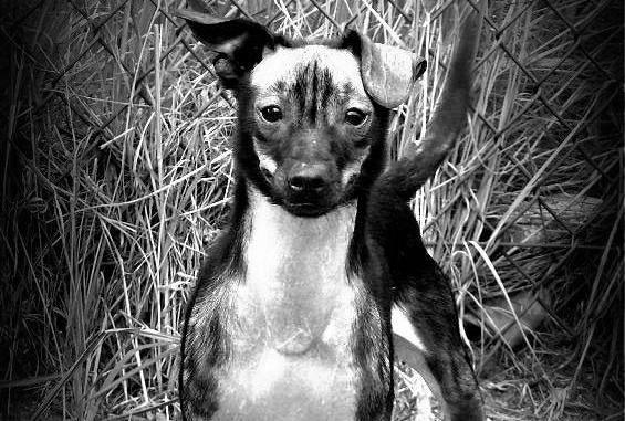franek pies zabójstwo las marceliński - Fundacja Pomocy Zwierzętom Kundel Bury