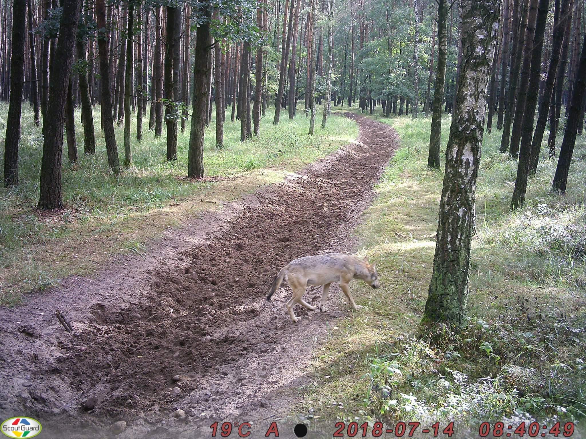 received_1066493290186422 - Słuchacz