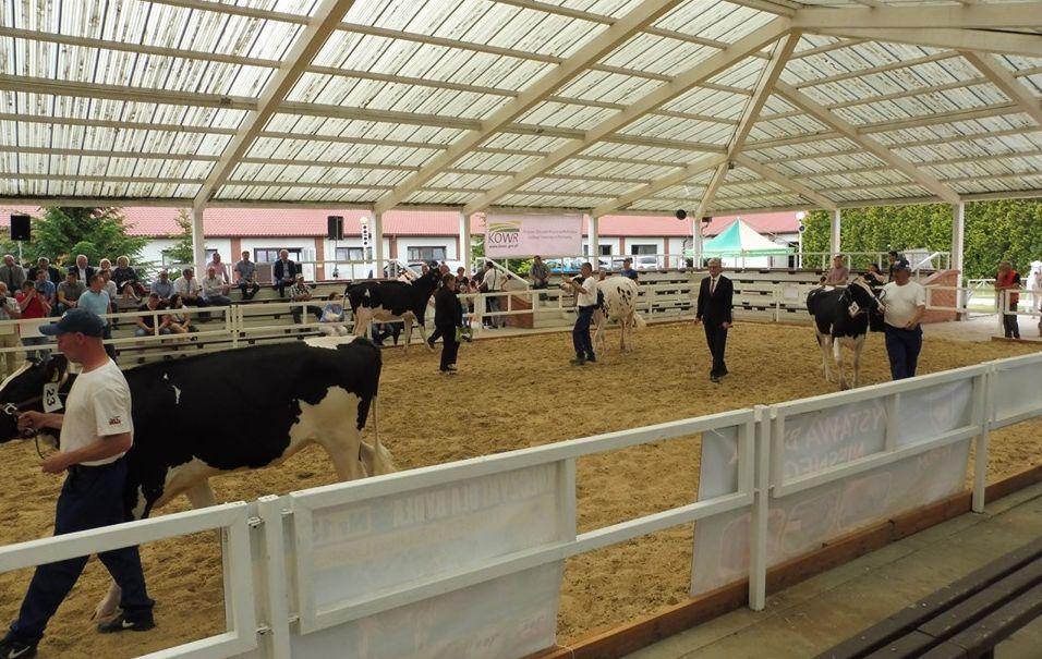 sielinko wystawa krowy - WODR Poznań