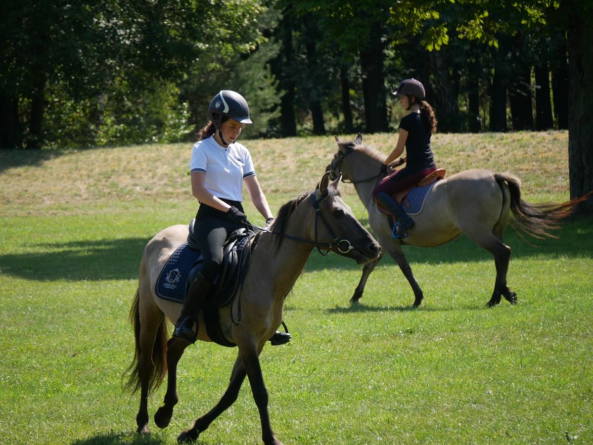 stado ogierów konie sieraków - Kacper Witt