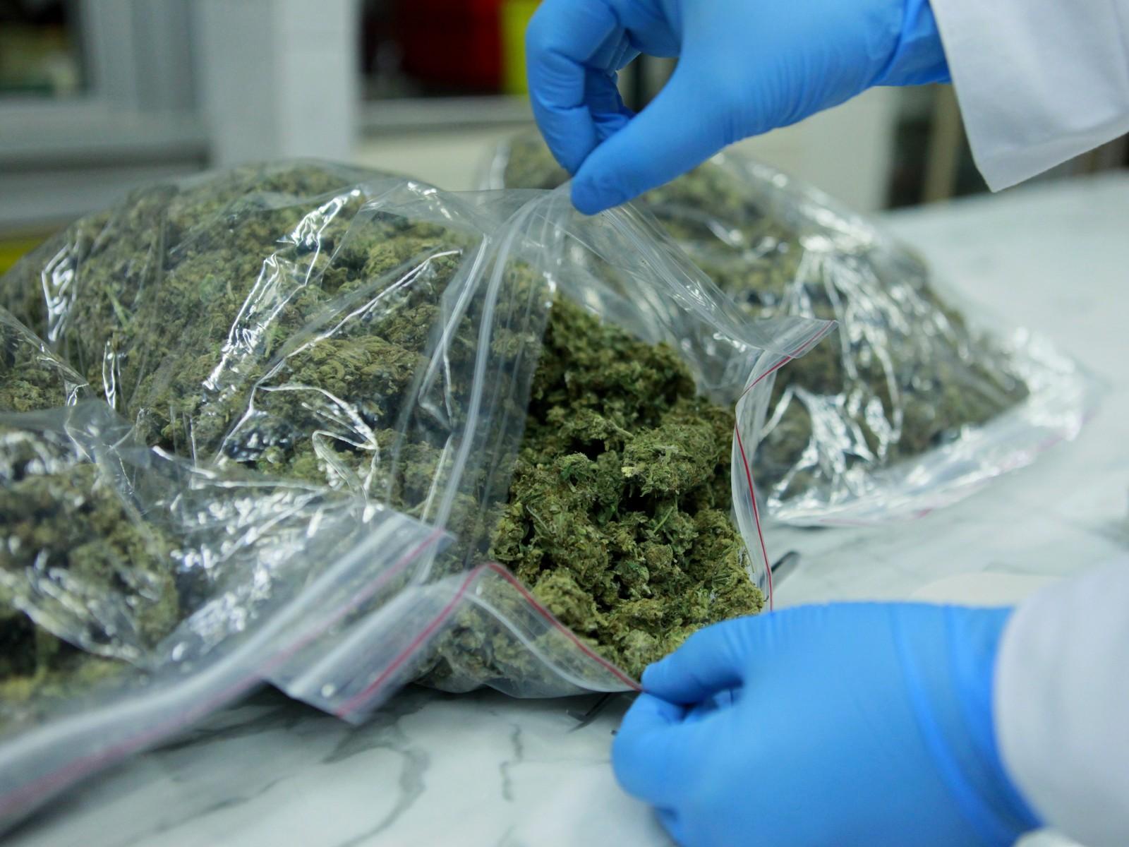176 kilogramów marihuany  - Wielkopolska Policja