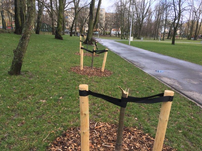 ułamane drzewka Park Trzech Kultur gniezno - Rafał Muniak