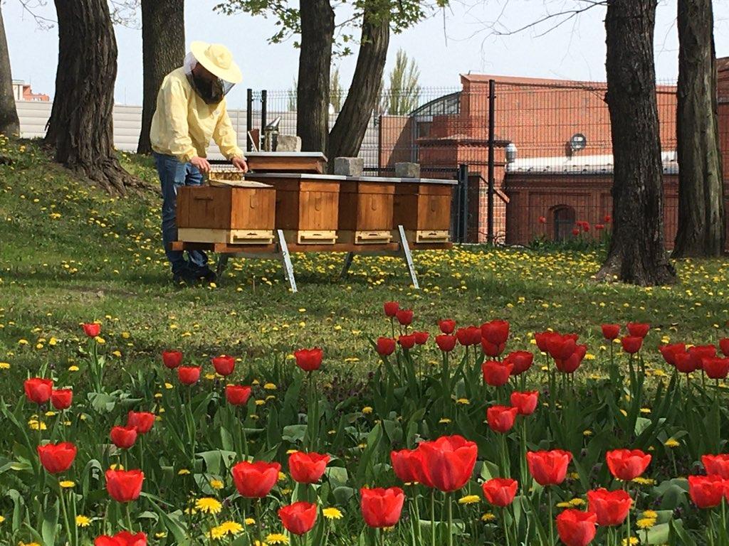 pszczoły pasieka miejska gniezno - Rafał Muniak
