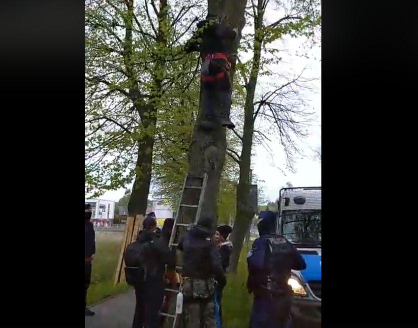 protest suchy las lipy - Zielona Fala