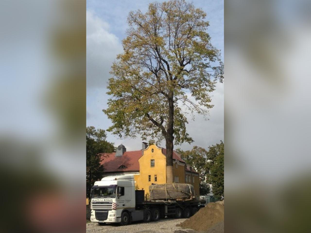 bukowska wycinka drzew inwestor - Bukowska 18 MP