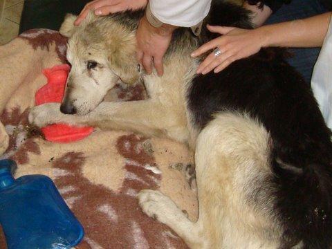 Pies porzucony pod drzewem - Helpanimals