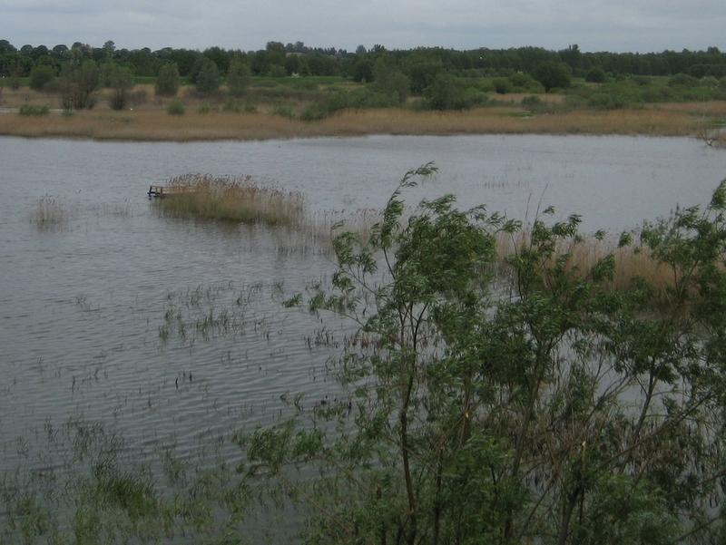 rozlewiska, mokradła, woda, powódź - Jacek Kosiak