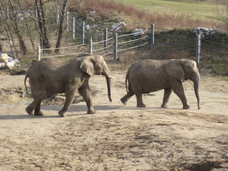 Słoniarnia - słonie - Anna Skoczek