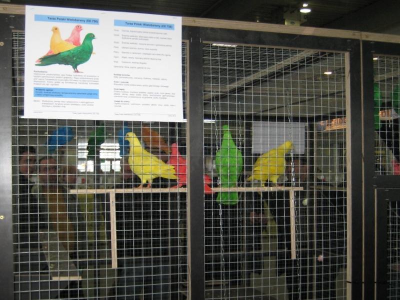 Kolorowe gołębie - Anna Skoczek