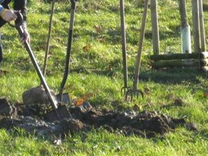 Sadzenie drzewka
