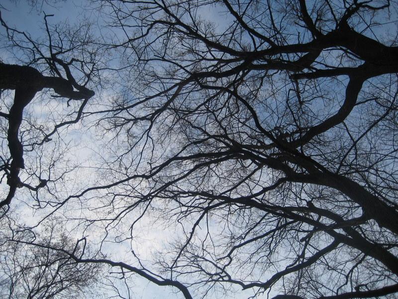 wiosna drzewa - Jacek Butlewski