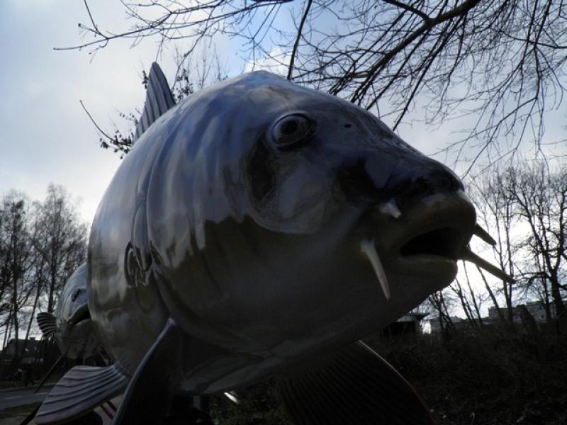 wielka ryba z trzcianki 1 - Nadnotecka Grupa Rybacka
