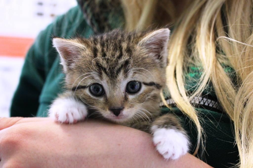 schronisko dla zwierząt bukowska kot - Schronisko dla zwierząt  w Poznaniu