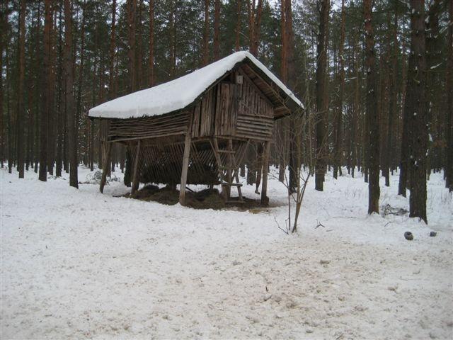 paśnik las zima - Wiesława Pinkowska