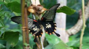 Motyle doleciały do Palmiarni