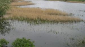Wysokie stany wód w dorzeczu Baryczy