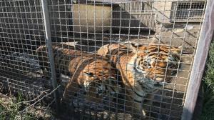 Dzikie zwierzęta nadal bez schronienia