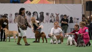 Wystawa psów na MTP