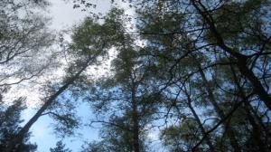 Nielegalna wycinka lasu?