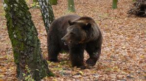 Niedźwiedzie zimy nie czują