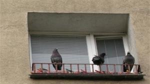 Ptasie kleszcze pogryzły chłopca