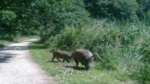 Zoo złapie i wypuści: sarny, jelenie i dziki