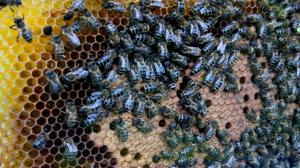 2 miliony złotych na pszczoły