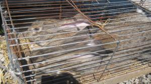 Zagłodzone króliki przy ulicy Suchej