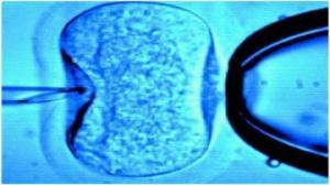 Wątpliwości PiS w sprawie in vitro