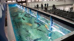 Jest akwarium, są ryby, będą targi!