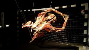 Wystawa ludzkich ciał.