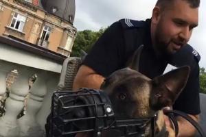 Policyjny pies służbowy w Radiu Poznań!