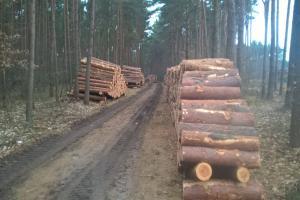 Mniej lasu w Zalasewie!