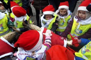 Koziołki przywdziały świąteczne stroje