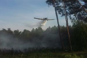 Pożar lasu pod Kościanem