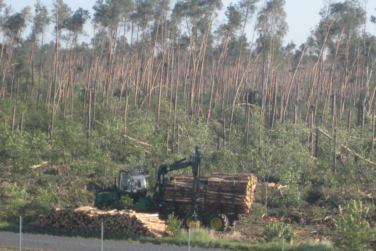 Gniezno porządkowanie lasu nawałnice - Rafał Muniak