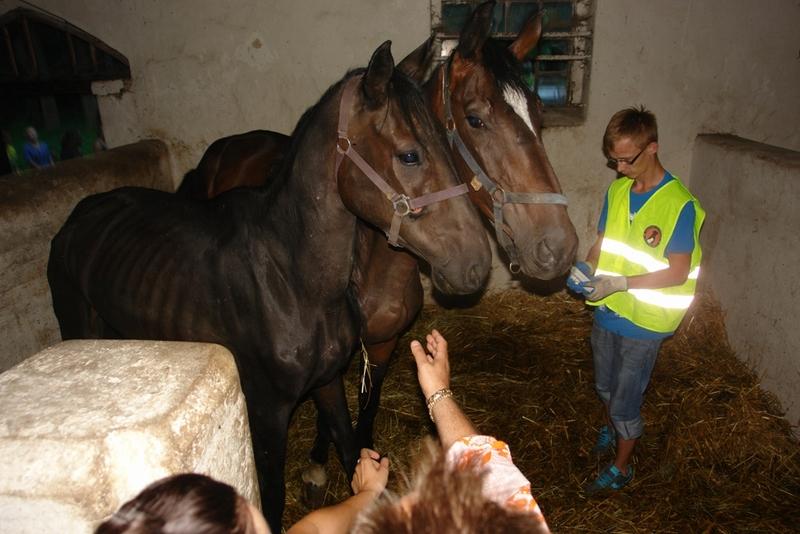 zagłoszone konie (1) - Grzegorz Bielawski