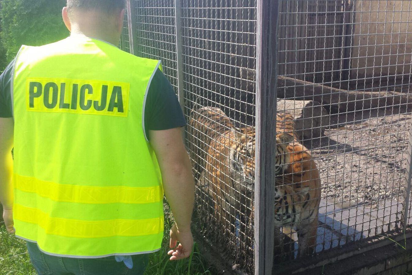 tygrysy pod śremem - Policja Poznań