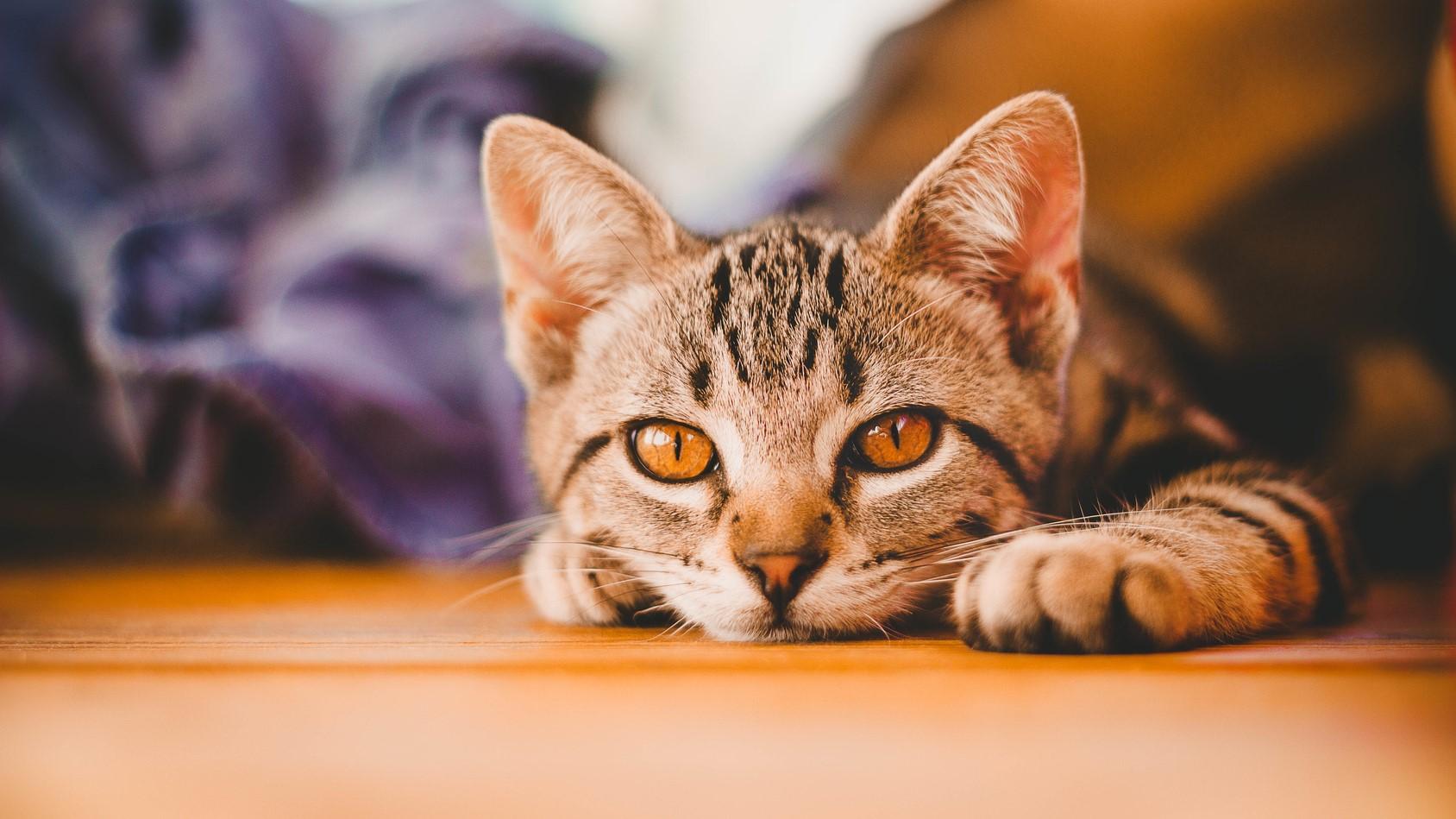 kot sterylizacja poznań - Fotolia